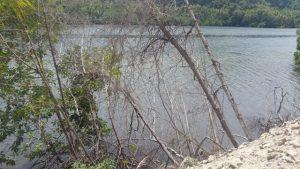 Pembangunan Jalan Lingkar Talaga Nusliko Puluhan Mangrove Turut Korban